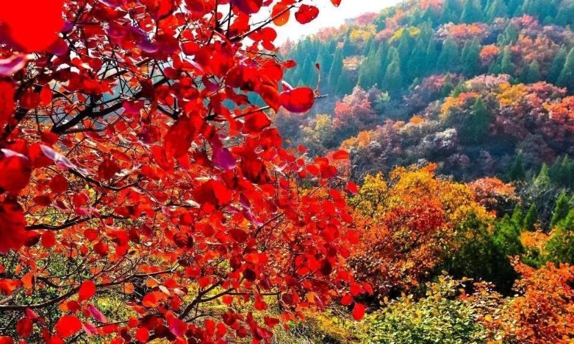 北京香山红叶