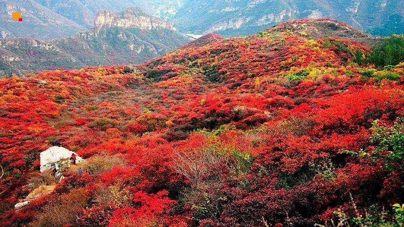 坡峰岭红叶节