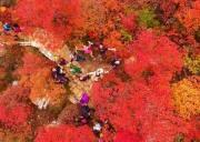 坡峰岭红叶节|国家地理推荐-年度最火红叶观赏地-6公里环形赏红叶栈道漫步红色海洋