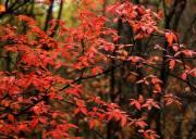 喇叭沟门红叶节|走进五彩斑斓童话世界-探寻北京最美秋色-穿越原始森林1日赏秋行摄