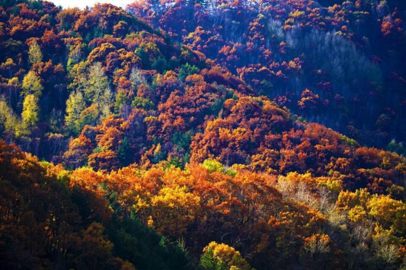 六里坪国家森林公园