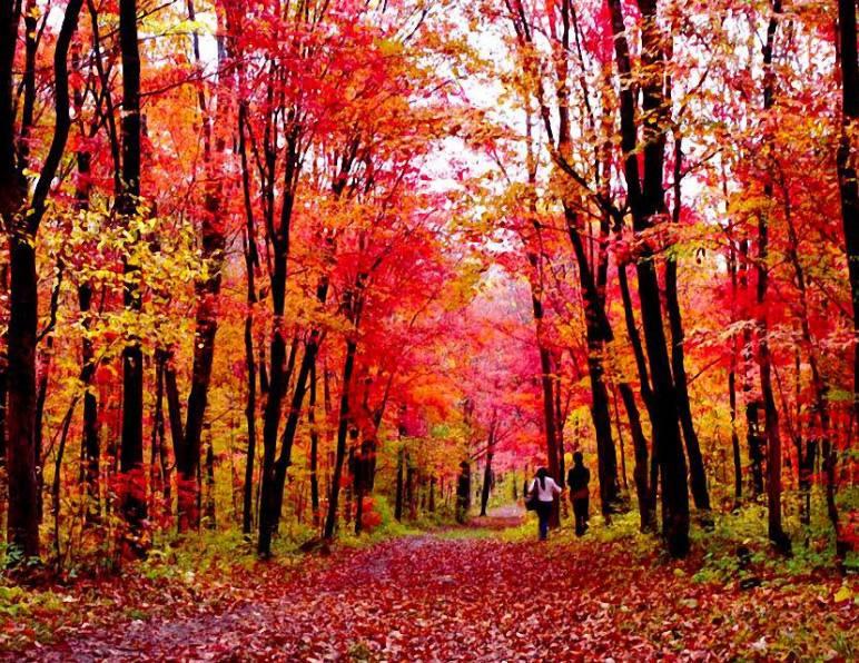 红叶谷的叶子别样红