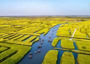 扬州|烟花三月下扬州の兴化油菜花海-李中水上森林-瘦西湖-何园
