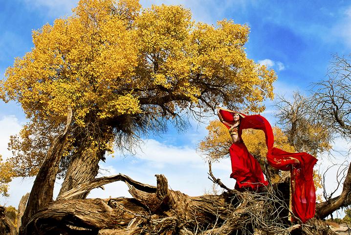 金色的额济纳旗胡杨林,土著人带你飞