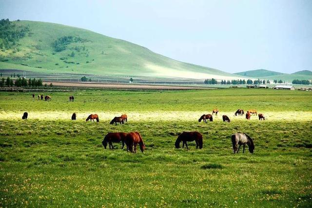 有一个绝美摄影地,叫夏天的坝上草原!